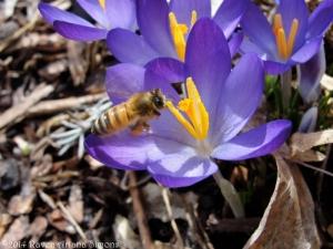 3:1:14 flying bee crocus sig