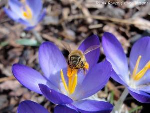 3:1:14 pollen face sig