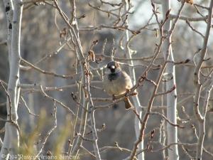 3:13:14 sparrow sig