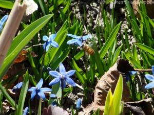 3:14:14 honeybee w:pollen sig