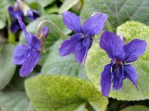 3:18:14 pretty violets sig