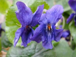 3:18:14 violets closer sig