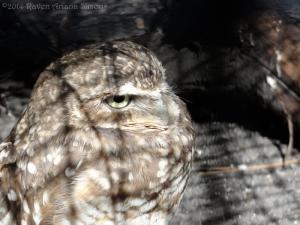 3:20:14 b owl 1a sig