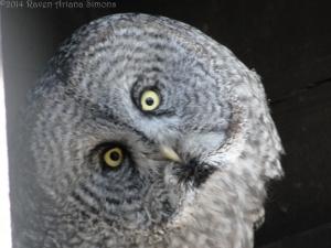3:20:14 funny owl sig