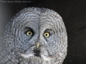 3:20:14 owl 1 sig
