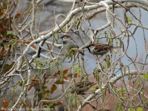 3:26:14 sparrows 1 sig