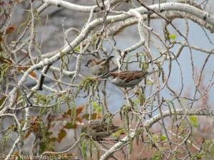 3:26:14 sparrows sig