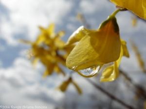 3:27:14 blossom drop good sig