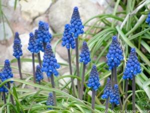 3:29:14 g hyacinths sig