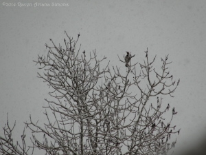 3:30:14 flicker in the snow sig