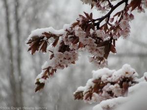 3:30:14 snow on branch sig