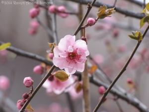 3:31:14 blossom M sig