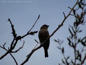3:5:14 sparrow sig