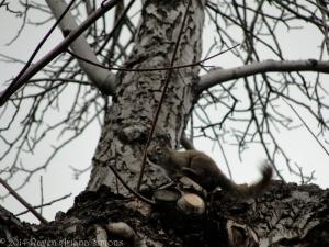 3:6:14 squirrel sig