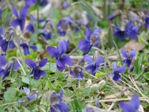 3:6:14 violets 1 sig