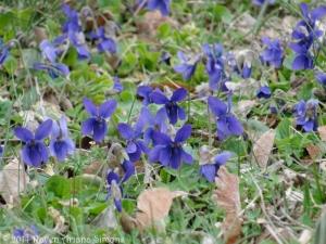 3:6:14 violets sig