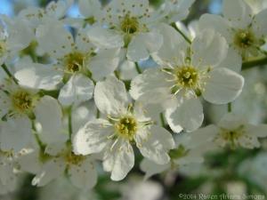 4:10:14 blossom 1 sig