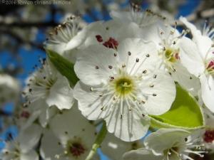 4:10:14 diff blossom 1 sig