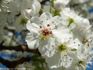 4:10:14 diff blossom sig