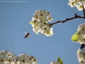 4:10:14 honeybee 1 sig
