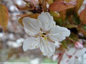 4:1:14 a blossom sig