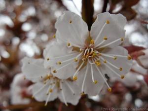 4:1:14 blossom pair closer sig