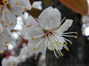 4:1:14 close up trunk blossom sig