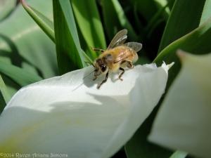 4:6:14 good  bee sig