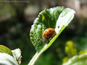 4:8:14 ladybug face sig