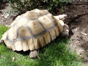 4:9:14 tortoise body sig