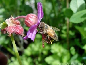 5:10:14 honeybee sig
