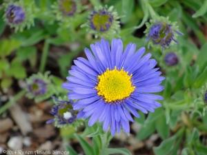 5:10:14 purple flower sig
