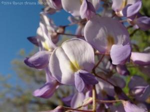 5:1:14 close wisteria 1 sig