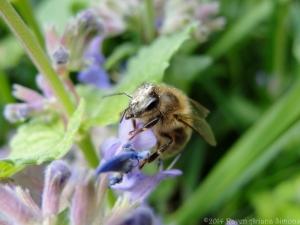 5:12:14 pollen head sig