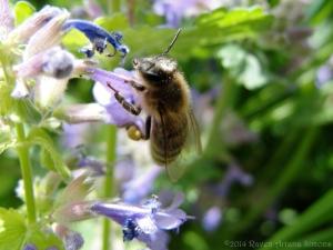 5:12:14 pollen lady sig