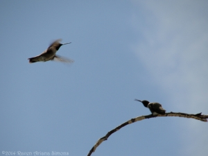 5:13:14 two hummers sig