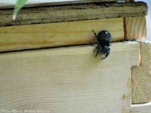 5:15:14 hive spider sig