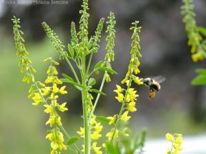 5:16:14 flying pollen sig
