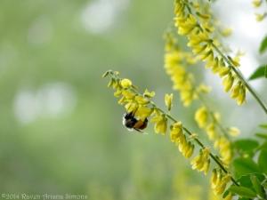 5:16:14 pollen pants sig