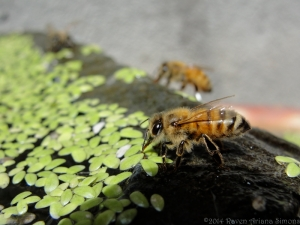 5:17:14 three bees sig