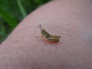 5:18:14 tiniest grasshopper sig