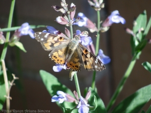 5:19:14 painted lady sig
