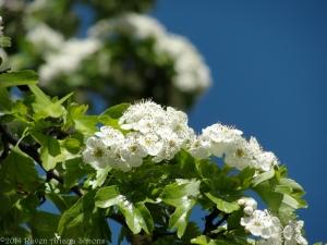 5:2:14 blossoms sig