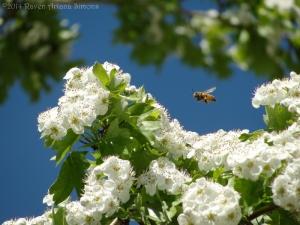 5:2:14 flying honeybee sig