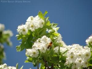 5:2:14 pollen bearer sig