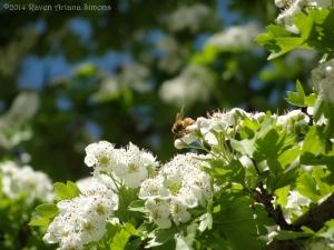 5:2:14 side honeybee sig