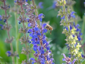 5:22:14 flying honeybee sig