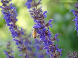 5:22:14 honeybee 2 sig