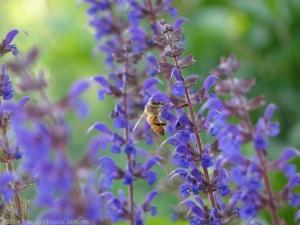 5:22:14 honeybee sig