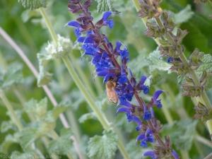5:22:14 painterly honeybee 1 sig